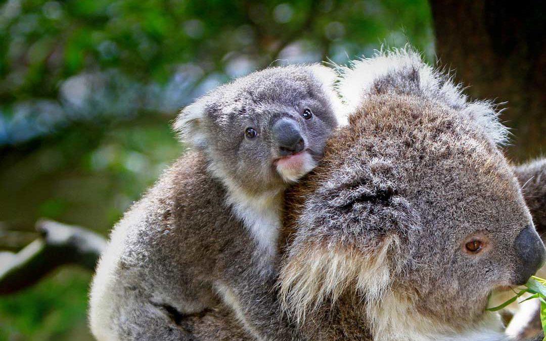 In jedem Wesen die eigene Mutter erkennen
