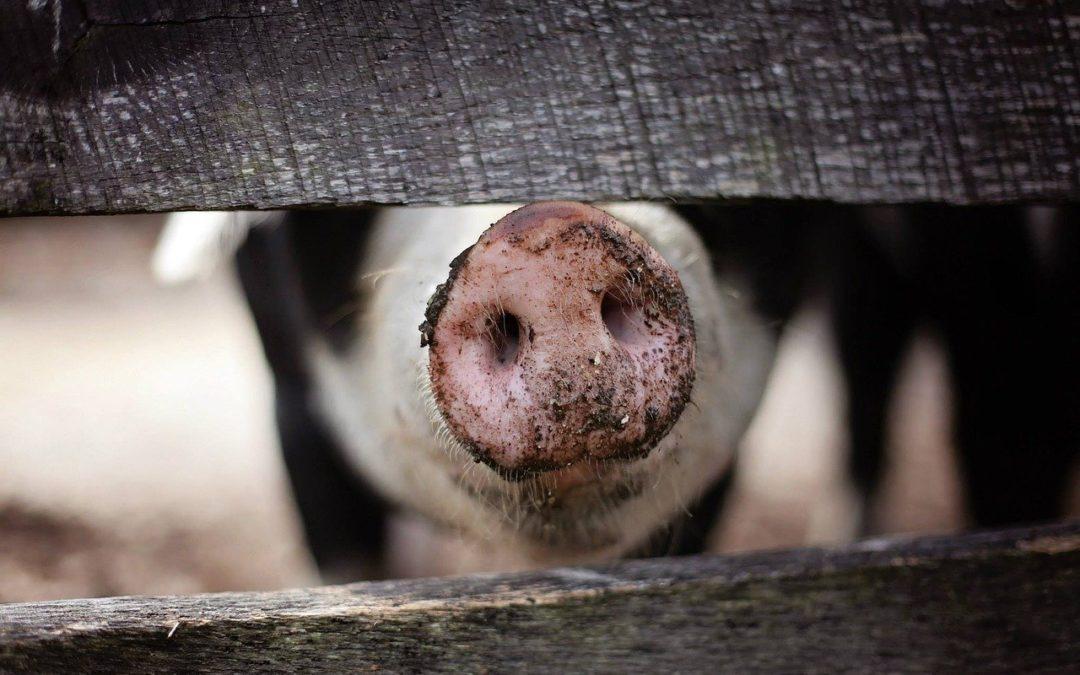 Über Fleisch, das limbische System und die Esskultur